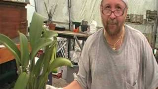 getlinkyoutube.com-The Orchid Doctor - How to Replant an Orchid Part 3 Final - orchidmania south florida