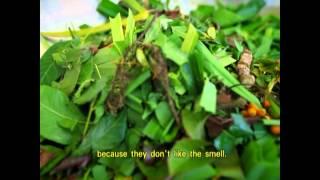 getlinkyoutube.com-บันทึกลุยทุ่ง ตอน...สมุนไพรหมักไล่แมลง