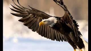 שבעה בעטלירס הנשר הגדול - הרחמים הגדולים שיתגלו בימות המשיח כבר כאן