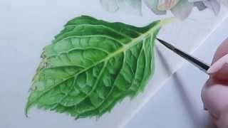 getlinkyoutube.com-Watercolor Hydrangea Leaf