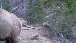 getlinkyoutube.com-75 Days Sasquatch Canyon on Gamecam