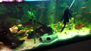 getlinkyoutube.com-135 gallon turtle and fish tank