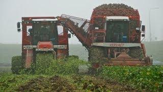 Vervaet Beet Harvesting Team / Bietenrooien - Loonbedrijf van Gastel