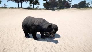 getlinkyoutube.com-Far cry 4 Animal Fights PS4