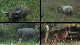 getlinkyoutube.com-Journeys in India: Kaziranga