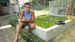 """getlinkyoutube.com-Organic Farming in the Philippines (reality TV, episode 17: """"fishy, beef cake!"""")"""