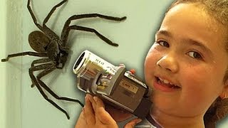 getlinkyoutube.com-Big Spider Nerf Gun Attack Dyson DC39 Vacuum Capture Kids React Slowmo Study
