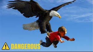 getlinkyoutube.com-Eagle Attack Eagle vs Snake, Goat, Man, Wolf النسر يقاتل الافعى والذئب والمعزة والانسان