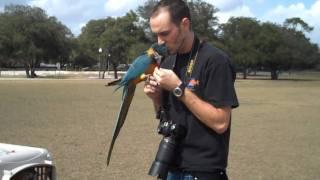getlinkyoutube.com-First Time at Blue Jacket Park Freeflying