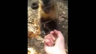 getlinkyoutube.com-[유준호 더빙] 난 사실 침팬지가 아닐세