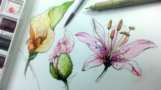 getlinkyoutube.com-How to Draw & Paint Flowers with Ink and Watercolor Part 1