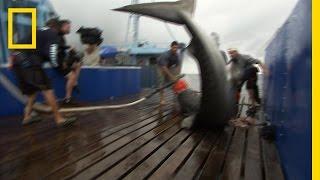 getlinkyoutube.com-A Fighting Tiger | Shark Men