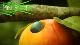 getlinkyoutube.com-Minuscule - Love Apple / Pomme d'Amour (saison 2)