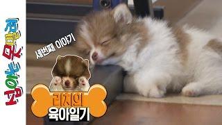 getlinkyoutube.com-리치에게 선물을 주다! + 강아지 목욕시키기 [섭이는못말려]