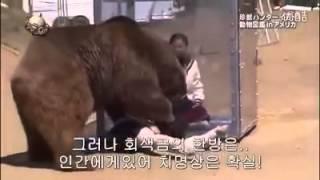 getlinkyoutube.com-그냥 곰에게 걸리면 죽었다생각하셈