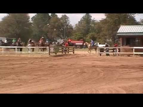 Six Fortunes on Fire palomino 3yo mare