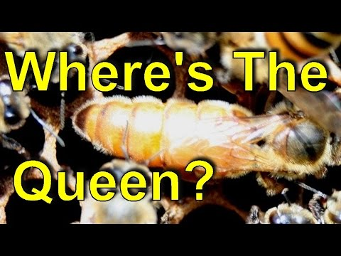 Beekeeping - 60 Sec Beekeeper - Test Your Queen Finding Skills - Episode 12