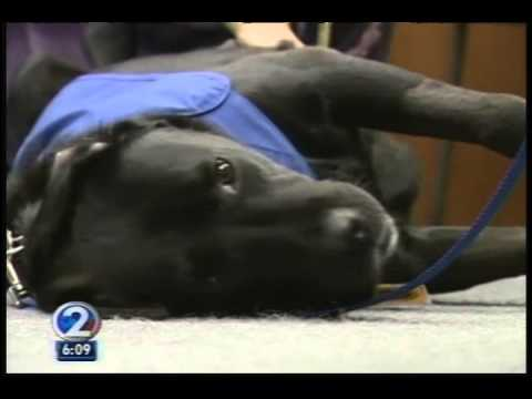 Assistance Dogs of Hawaii: Courthouse Dog