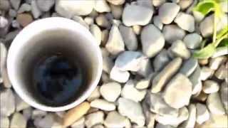 getlinkyoutube.com-Aquaponics, a Better Bell Siphon