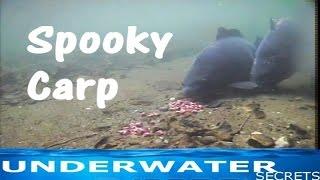 getlinkyoutube.com-Spooking off the rig underwater carp fishing