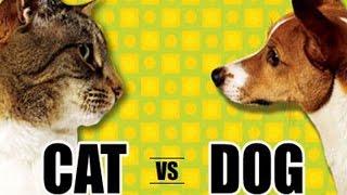 КОШКИ ПРОТИВ СОБАК! CATS VS DOGS! ВЕЧНЫЙ СПОР КТО ЛУЧШЕ?