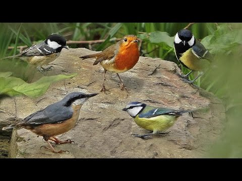Bird Sounds in The Spring Garden - Birds Singing and Chirping on A Beautiful Morning