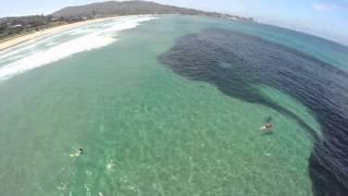 Hewan misterius di dalam laut, ada manusia diatasnya!