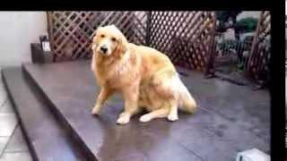 getlinkyoutube.com-Magic dog