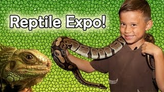 getlinkyoutube.com-REPTILE SHOW & EXPO 2012! Venomous Snake Display, Geckos, Alligator, Bearded Dragons and more!
