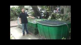 getlinkyoutube.com-Aquaponics Philippines, MADE Cascade System with Filtration
