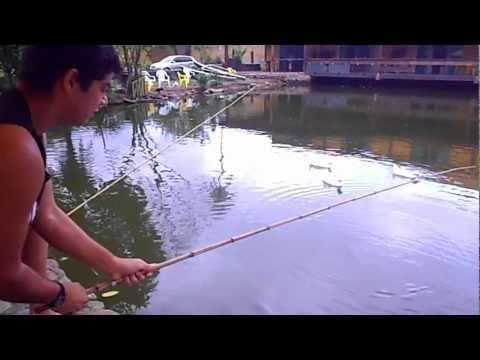 O maior peixe pescado em rio do mundo impressionante Ubatuba SP !