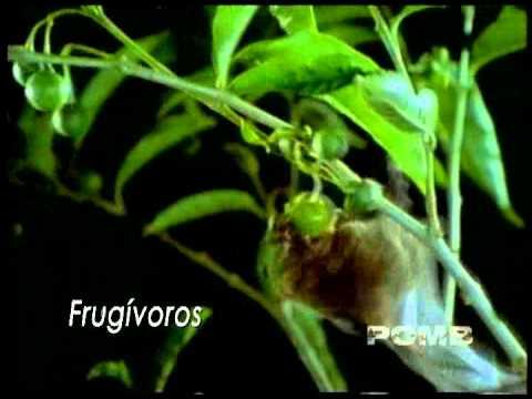 Murcielagos   Aliados Nocturnos   Generalidades