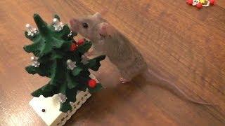 Мышь украшает новогоднюю елку