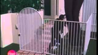 getlinkyoutube.com-OJ Simpson - Video of  the Murder