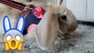 Leash Training Frizbee the Bunny! 😱 (WK 325.2) | Bratayley