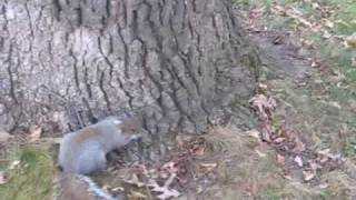 getlinkyoutube.com-Drunk Squirrel