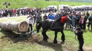getlinkyoutube.com-Concurs cu cai de tractiune - Proba Speciala - Editia IV - Gilau, Cluj - 2016