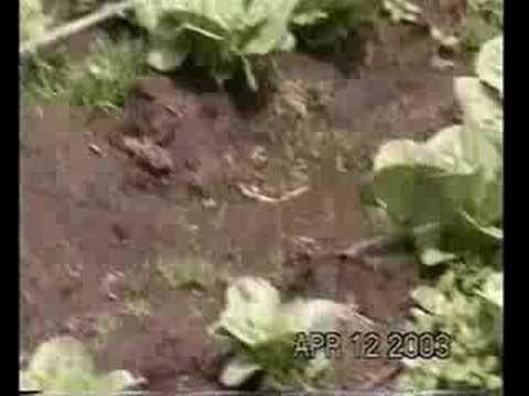 Cultivos de hortalizas