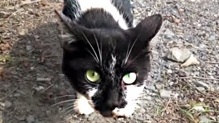 getlinkyoutube.com-【まさかの展開〜】喧嘩をしてた猫と再会☆猫ちゃんをナデナデしようとしたら・・・   Feral Cat and the reencounter that quarrelled before