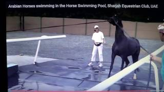 Horse Being Forced To Swim For The First Time - The Good, The Bad & The Ugly