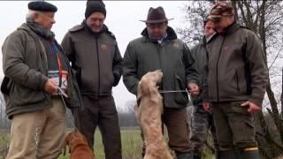 getlinkyoutube.com-Gara Segugi e Segugisti a Quinzano 2013 2°parte