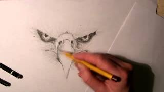 Eagle Speed Drawing