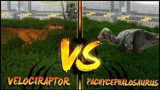getlinkyoutube.com-Dinosaur Battles - Velociraptor Vs Pachycephalosaurus | Jurassic Park : Operation Genesis