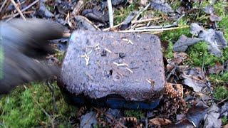 getlinkyoutube.com-Money box found buried at WW2 location.