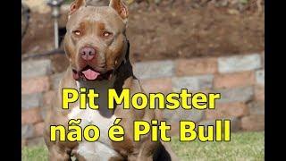 Pit monster não é Pit bull! E ainda não é raça