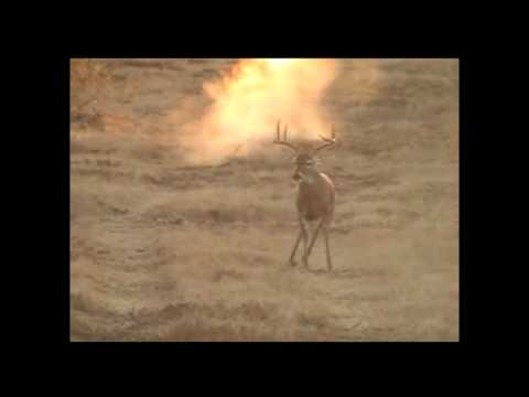 Trophy Deer shot, innocent bystander killed (cut version)
