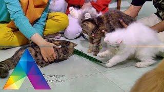 GENWHY - Ricis Itu Hello Kitty Banget Loh (26/02/16) Part 3/3