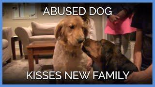 getlinkyoutube.com-Abused Dog Kisses New Family