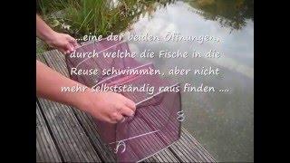 getlinkyoutube.com-Fischreuse - Verwendung im Gartenteich