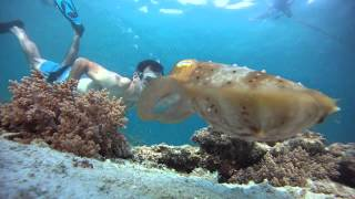 getlinkyoutube.com-Mantis Shrimp and Cuttlefish